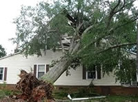 Tree Uprooted By Storm Damage